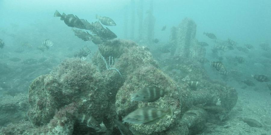 Wreck of the Concha investigated as part of the ALSF funded projects