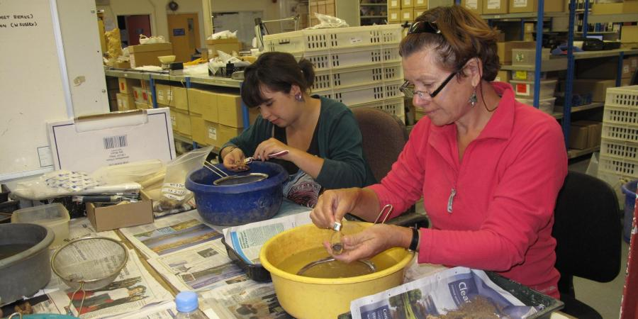 Volunteers washing finds in Wessex Archaeology's head office