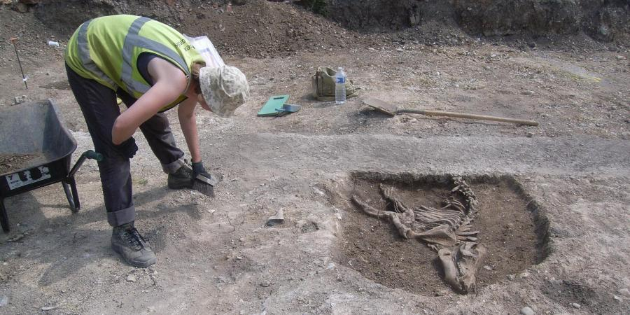 Excavation of an animal burial at MOD Durrington