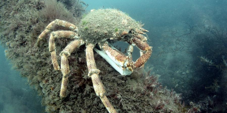 Wrecks on the Seabed: Ecology