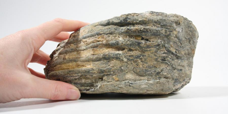 Mammoth tooth reported through marine protocol