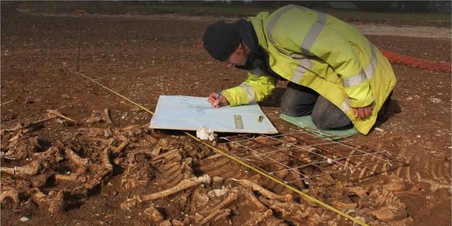 Recording animal remains on site
