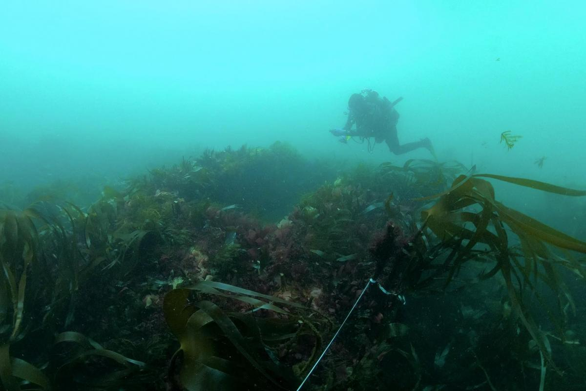 Diving on HMS Montagu by Wessex Archaeology