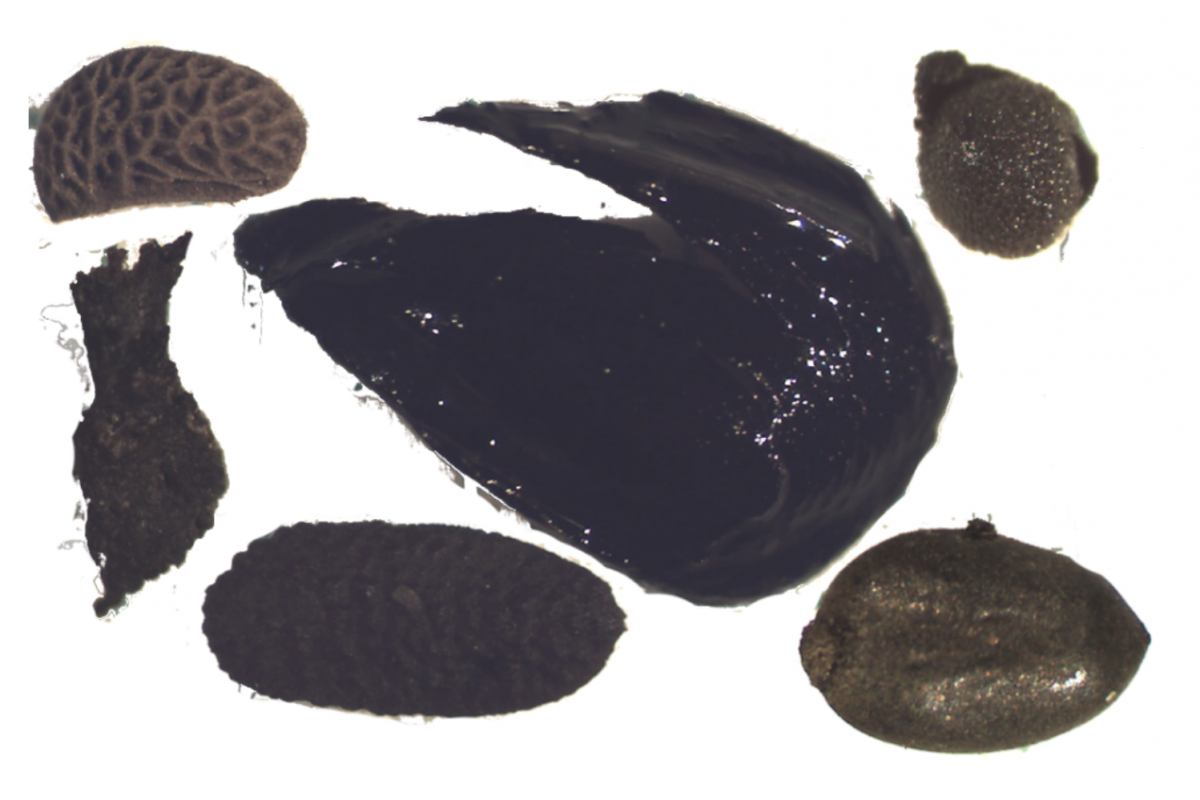 Magnified examples of environmental materials found in a sample including raspberry, apple and elderberry seeds and wheat chaff