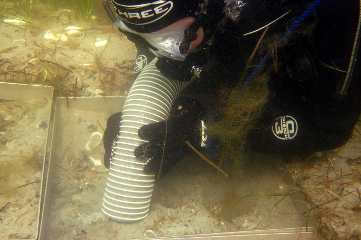 Diver excavating on the seabed