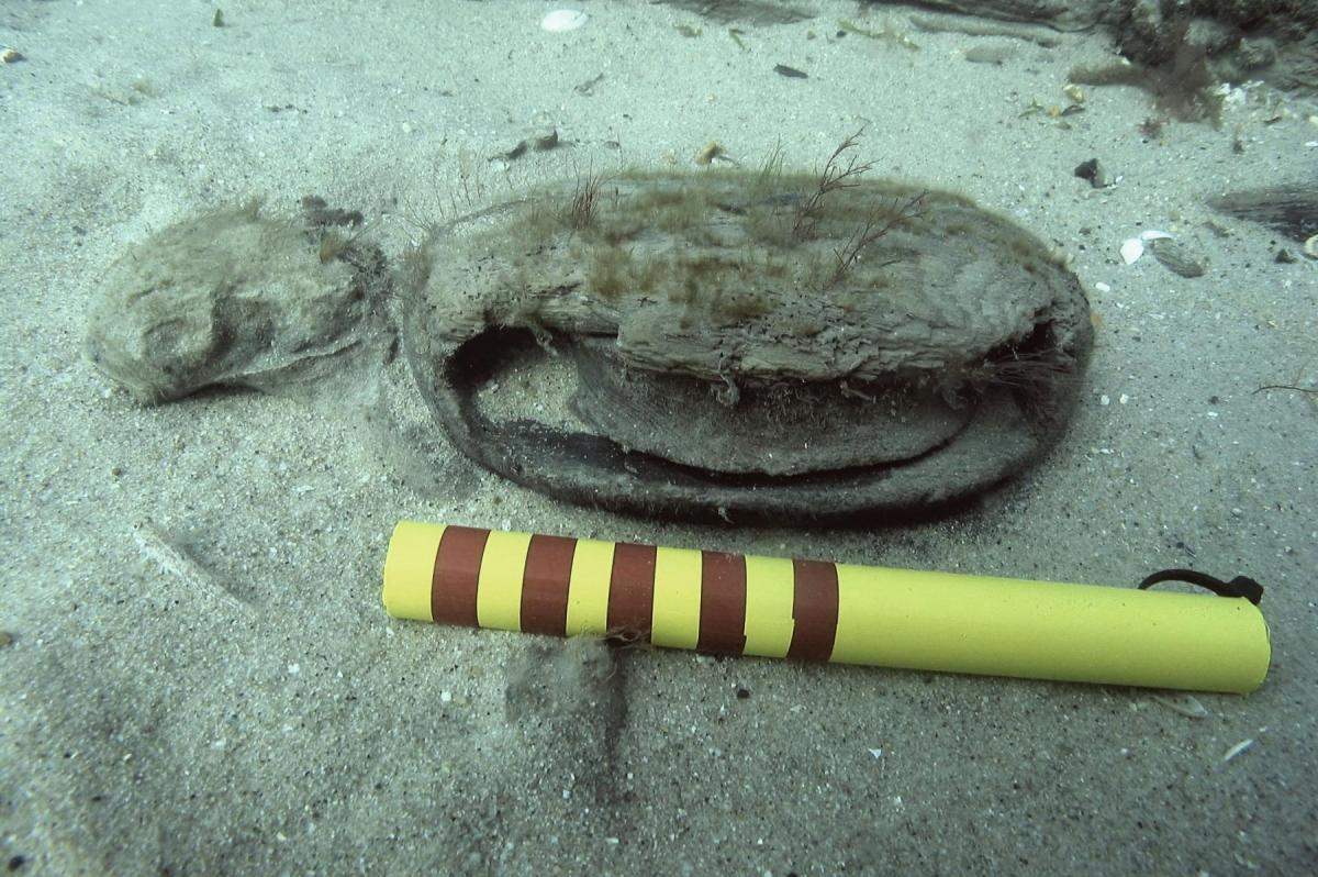 A pulley block on the 16th-17th century Swash Channel Wreck