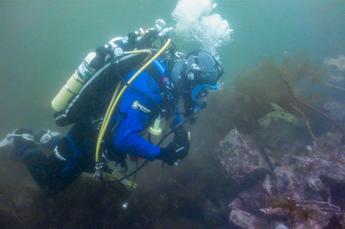 Volunteer diver on a wreck site