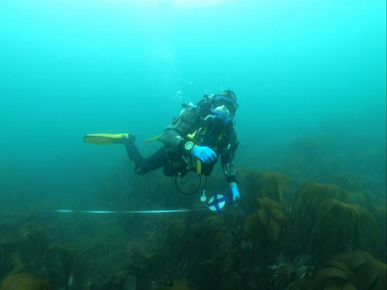 Wessex Archaeology diver on the HMS Montagu