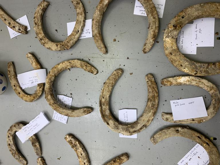 Early 20th century horse shoes found on Salisbury Plain, laid out on the table for local farriers to view