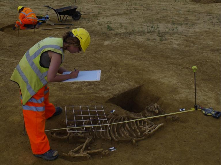 Recording an animal burial at Riding Court, Datchet