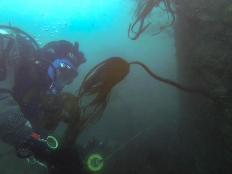 A diver on the wreck of HMS Montagu