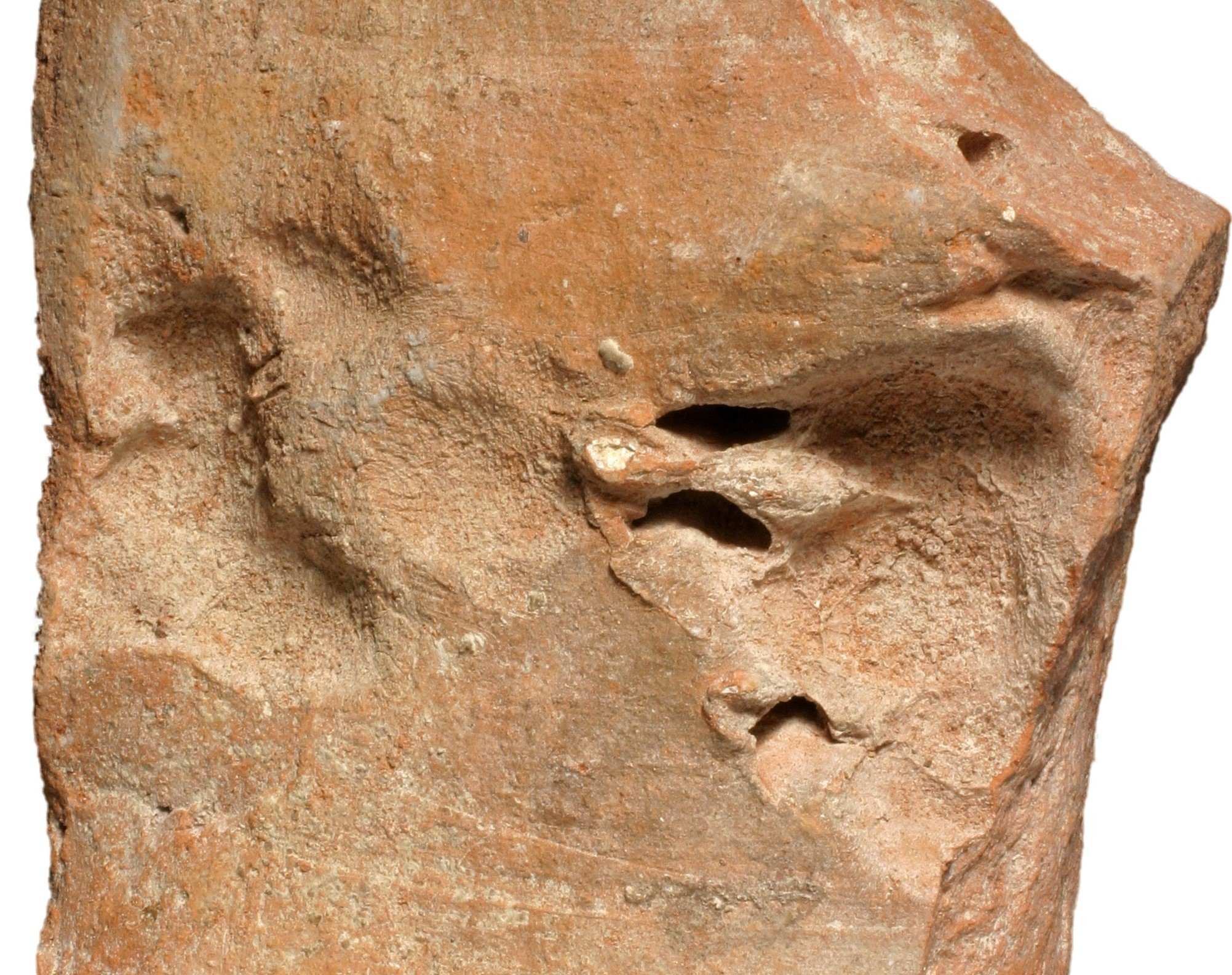 Lucky Paw Prints from the Past | Wessex Archaeology